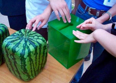Squarewatermelons_thumbnail2